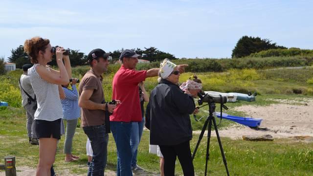 Sortie ornitho, visite du patrimoine de l'Ile d'Yeu © OT Ile d'Yeu