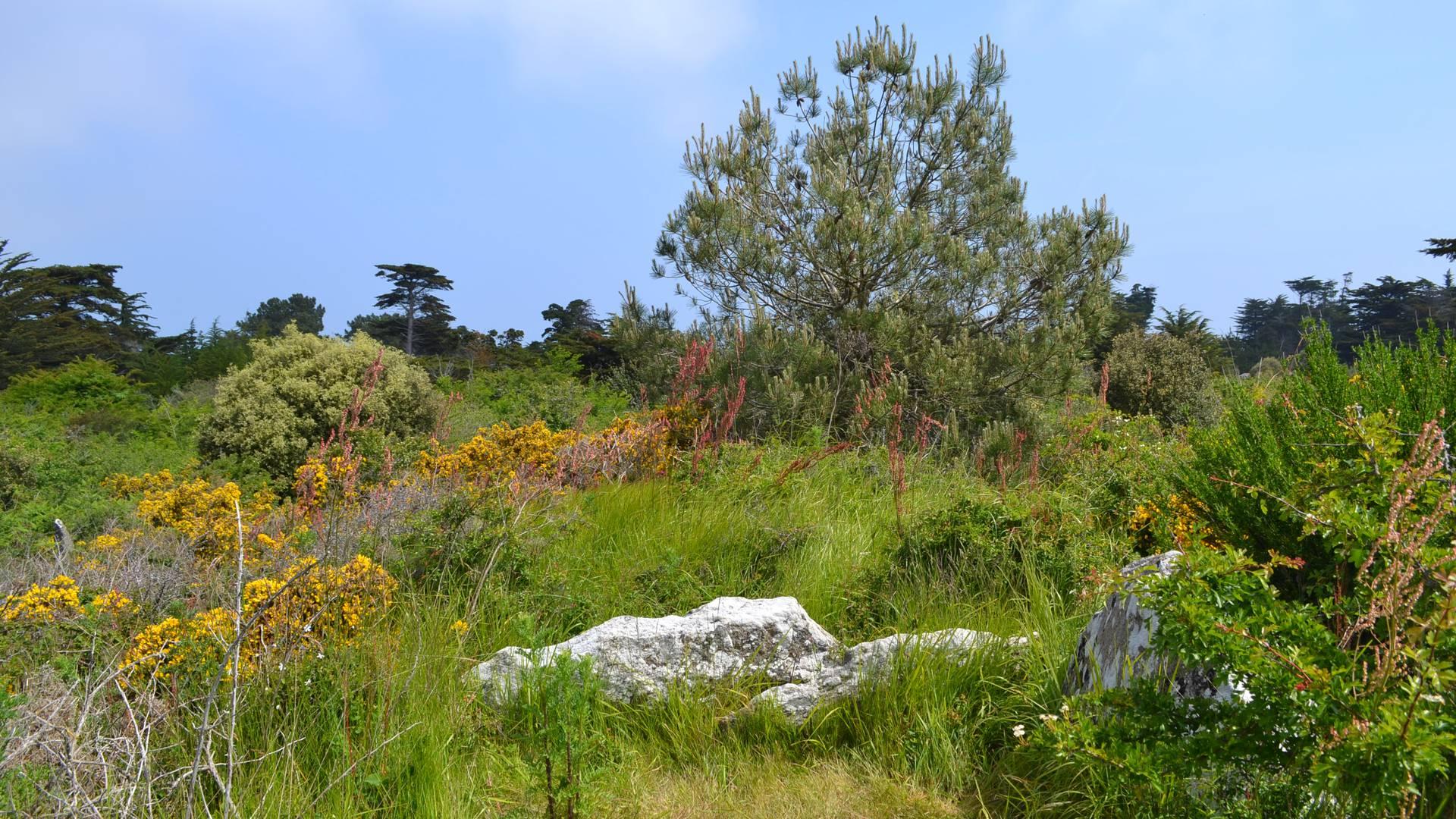 Trémureau des Landes, mégalithe, Ile d'Yeu