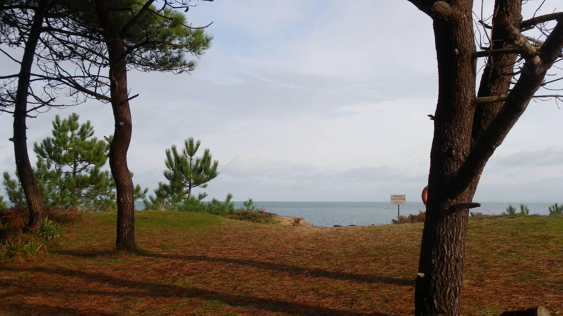 Bois des Conches - Ile d'Yeu