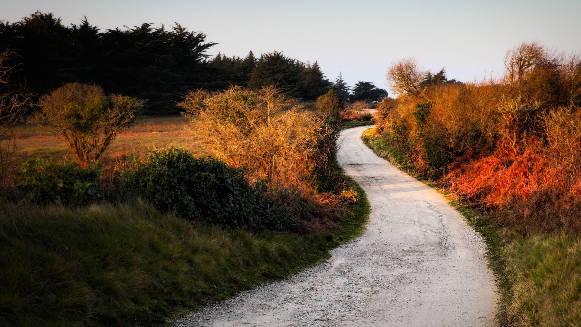Les chemins de l'île d'Yeu en Automne