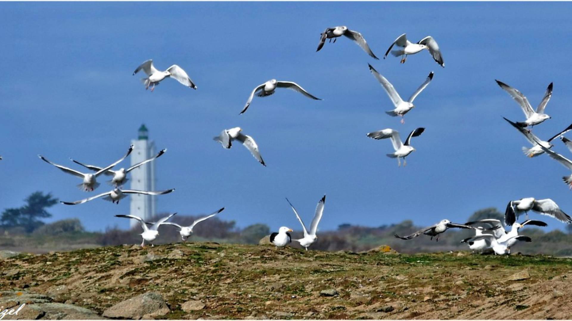 Grand phare de l'île d'Yeu - Office de Tourisme de l'île d'yeu Vendée © Luna Troizel
