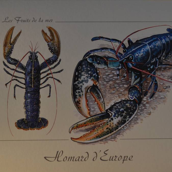 •Carte postale 1 €